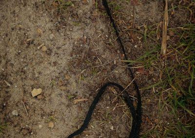 tekens op de grond (14)